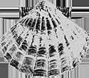Podere San Giacomo Montalcino - Logo